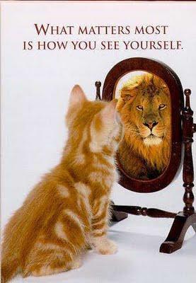 Cat self-awareness