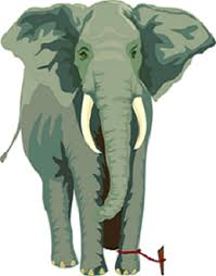 Elephant rope