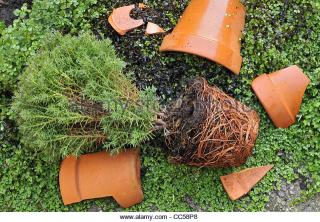 Broken-terracotta-garden-plant-pot-cc58p8